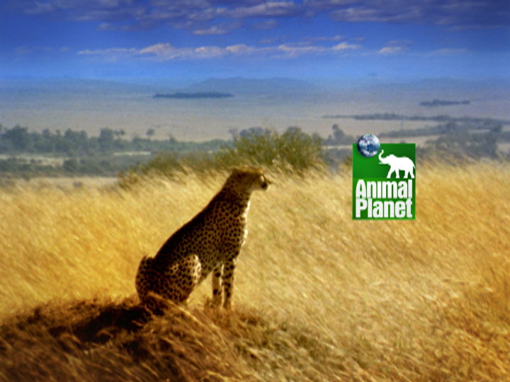 Troika Design Group Creates New Animal Planet Network Package 02