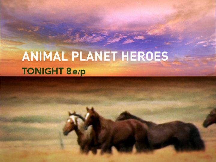 Troika Design Group Creates New Animal Planet Network Package 03