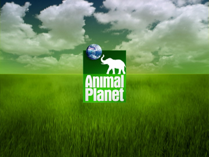 Troika Design Group Creates New Animal Planet Network Package 04