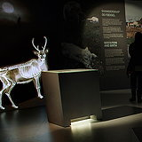 Wild Reindeer Exhibition by Gagarin