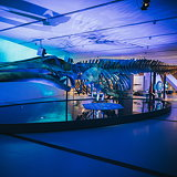 Bluecadet Creates Interactive Exhibits for Royal Ontario Museum