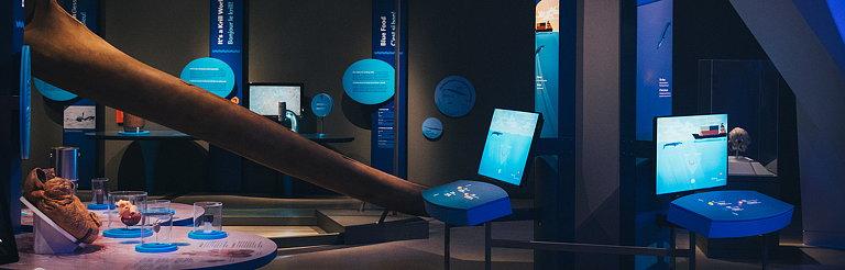 Bluecadet Creates Interactive Exhibits for Royal Ontario Museum